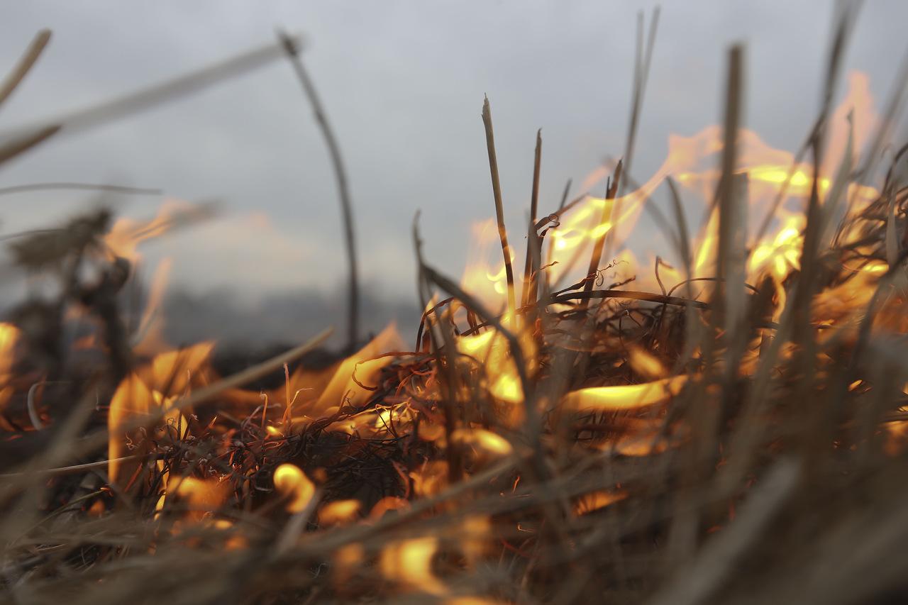 В Псковской области зафиксирован первый в этом году пал травы